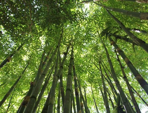 Why Bamboo Peshtemal Towels?